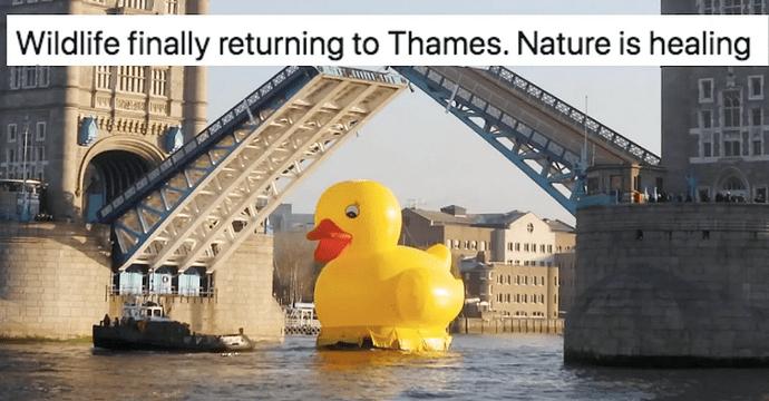 ThamesDuck