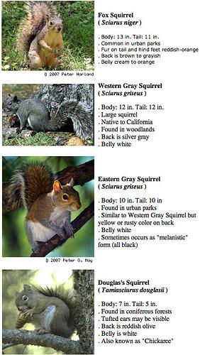 squirrel_faq_1