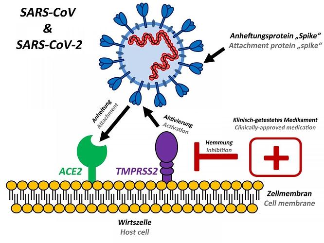 mar6-2020-dpz-coronavirus