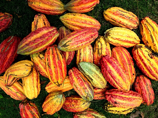 cacao%20beans