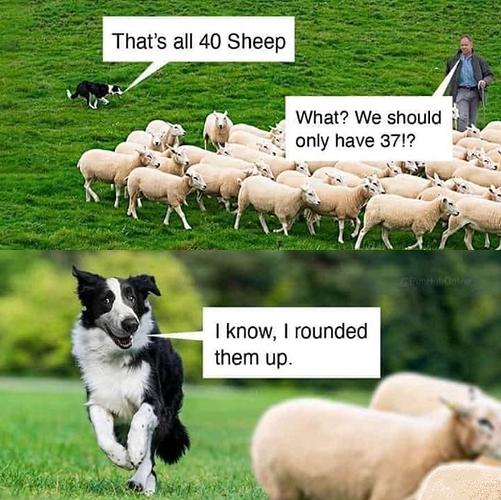 SheepRoundedUp