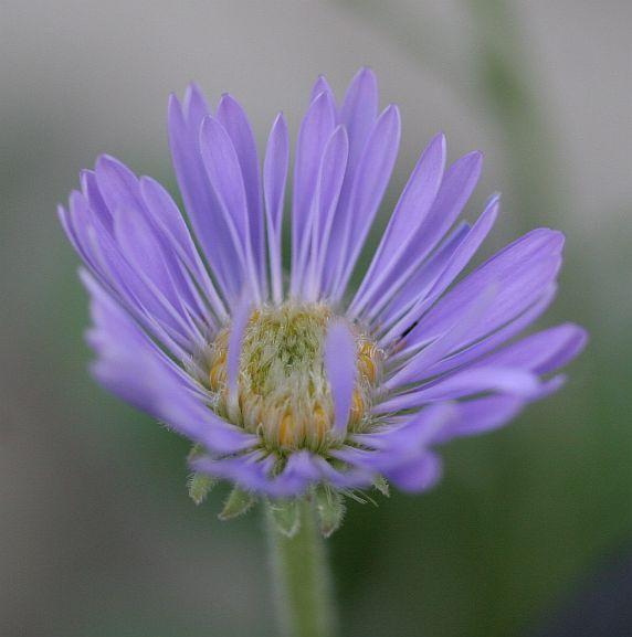 purpleyoung2
