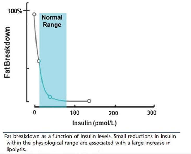 InsulinFatBurning