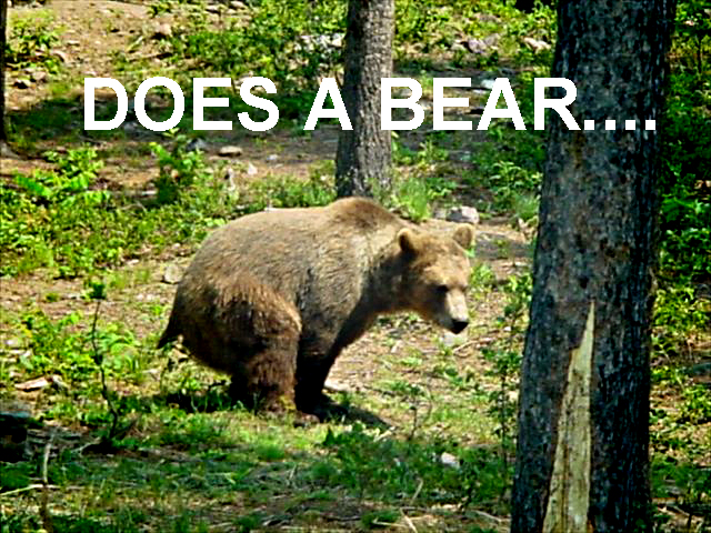 does a bear shit in the woods