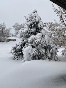 snow%20resized